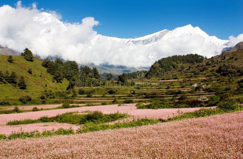 Mening van annapurna himal aan dhaulagiri stock fotografie
