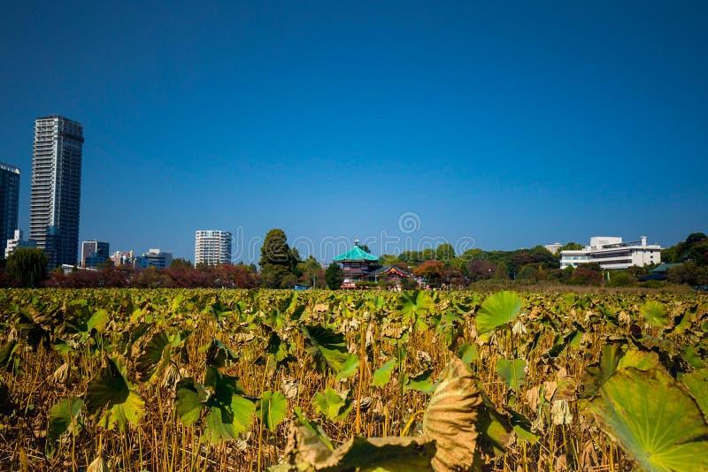 Mening van Bentendo-Tempel bij Ueno-Park stock foto