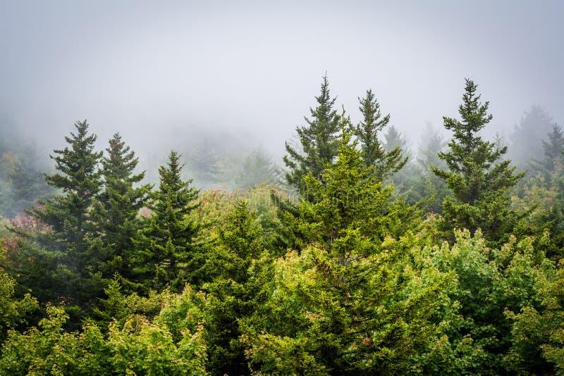 Mening van bomen in mist van Zwarte Rots, bij Grootvaderberg, I stock fotografie