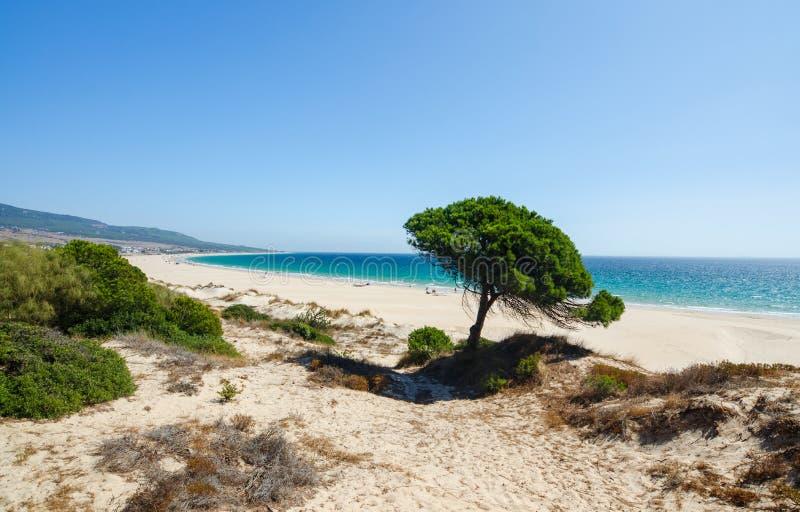 Mening van de Atlantische Oceaan, het mooie lange strand en de eenzame pijnboom stock afbeelding