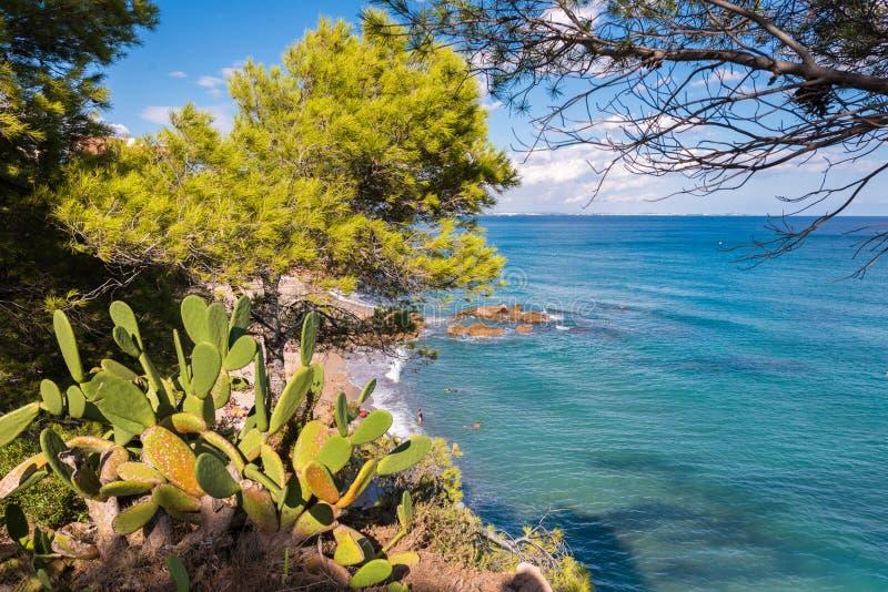 Mening van de cactus op de Costa Dorada-kust in Miami Playa, Tarragona, Catalonië, Spanje Close-up stock afbeeldingen