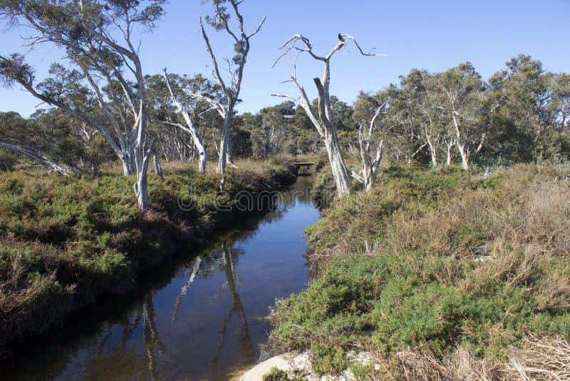 Mening van de gangweg langs het Leschenault-Estuarium Bunbury Westelijk Australië stock afbeelding