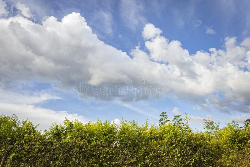mening van de hemel met grote witte wolken en kleine strook van vegetatie stock foto's