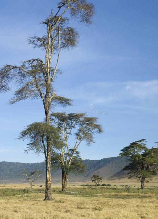 Mening van de Krater van meningsNgorongoro, Tanzania stock afbeeldingen