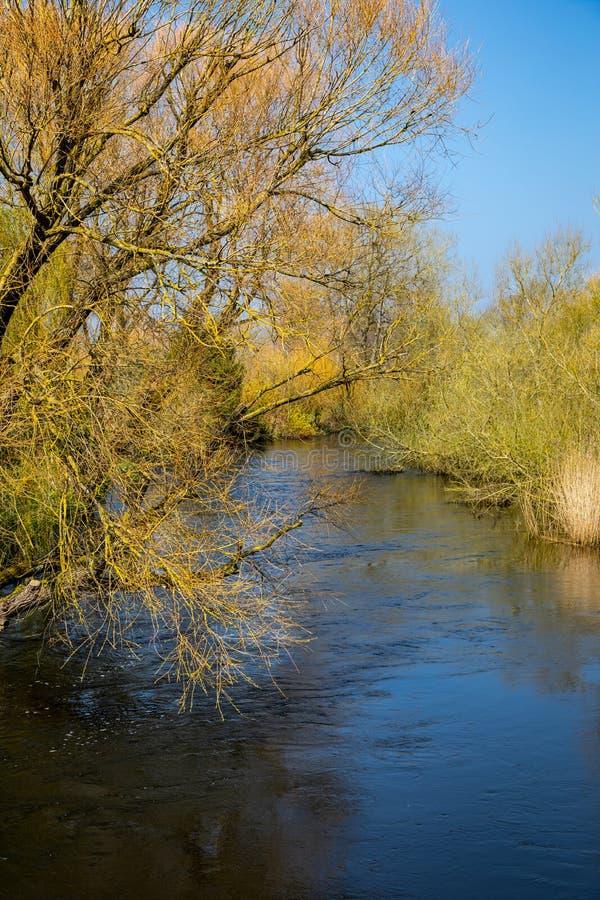 Mening van de Rivier Avon door Christchurch, het UK stock fotografie