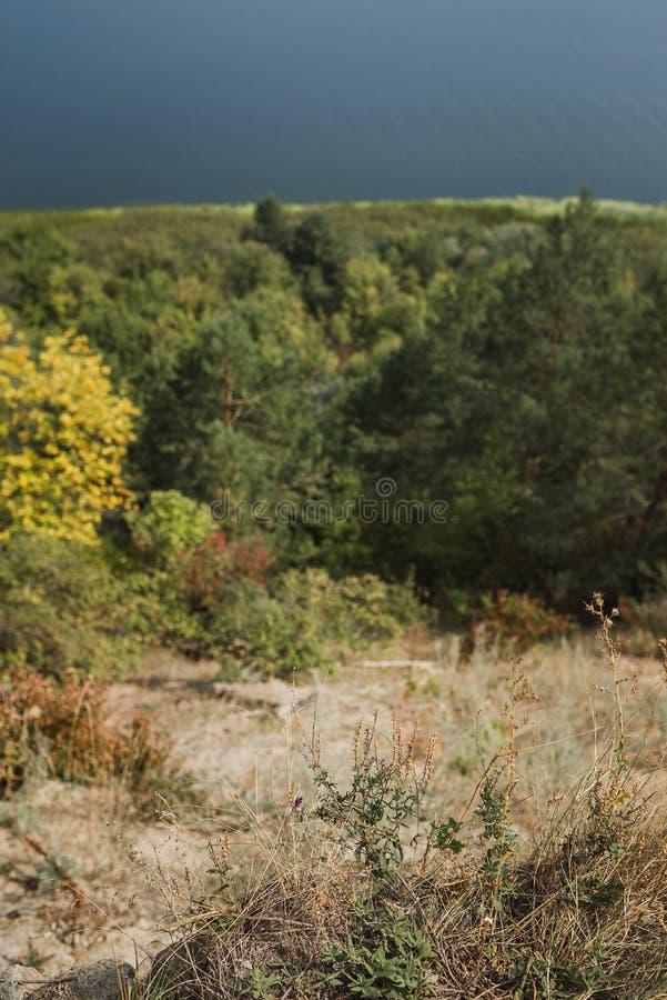 Mening van de rivier door het de herfstbos royalty-vrije stock foto