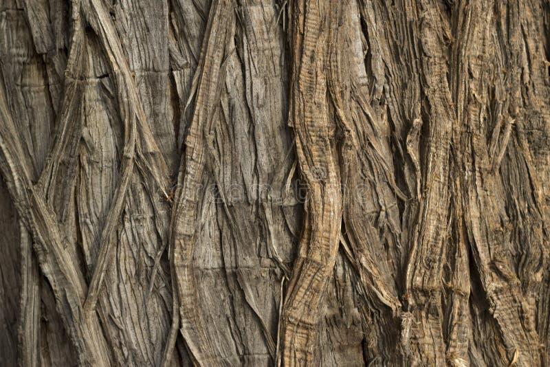 Mening van de textuur van de boomstam stock afbeeldingen