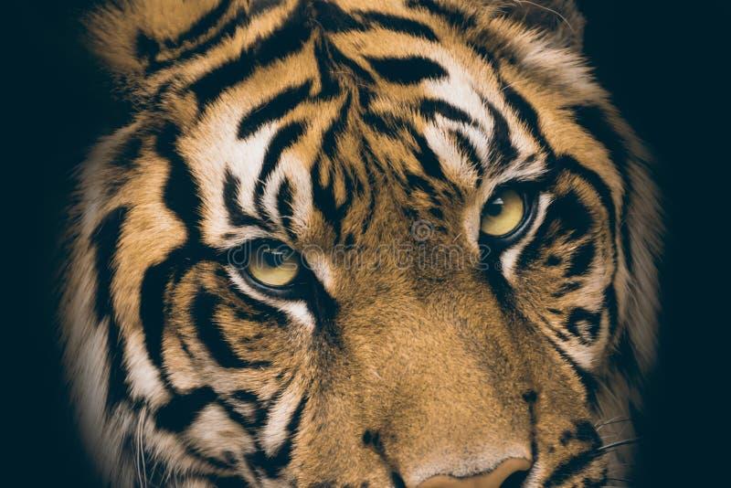 Mening van de tijger royalty-vrije stock foto's