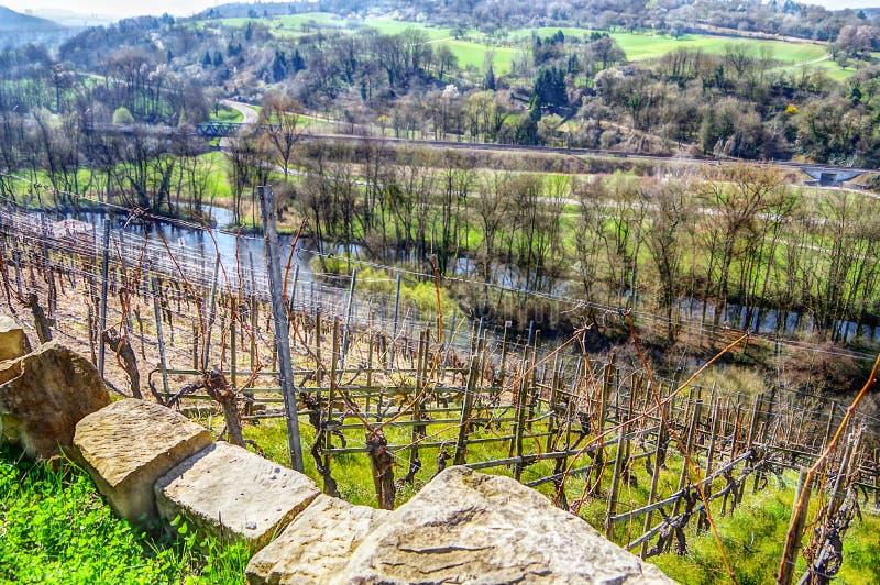 Mening van de wijngaard in de riviervallei royalty-vrije stock foto's