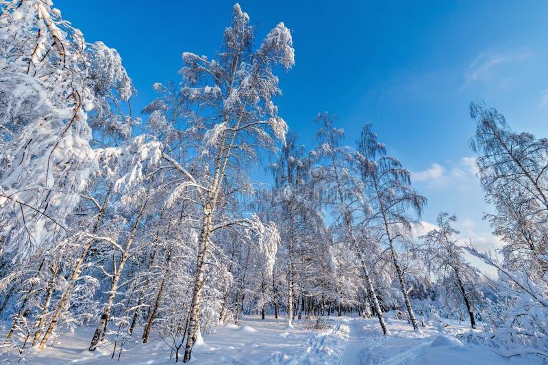 Mening van de winterbos royalty-vrije stock foto's
