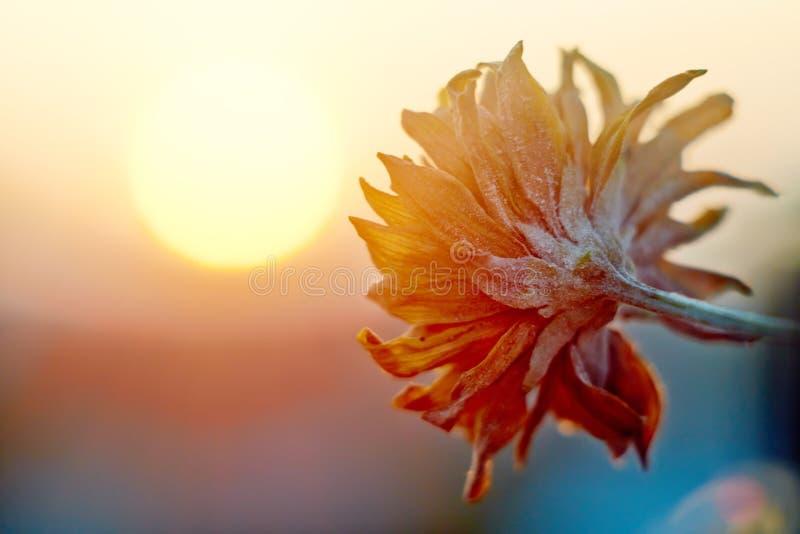 Mening van de zonsondergang en de bloem stock fotografie