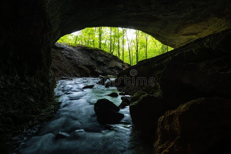 Mening van donker hol in groen bos stock afbeelding