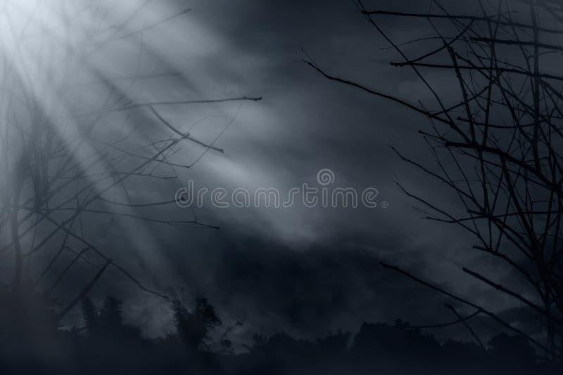 Mening van donkere bosachtergronden stock afbeeldingen