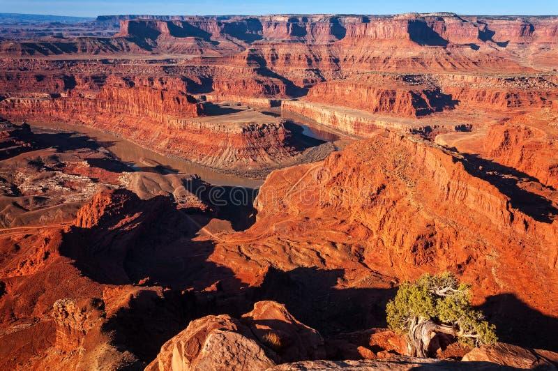 Mening van Dood Paardpunt - het Nationale Park van Canyonlands stock fotografie