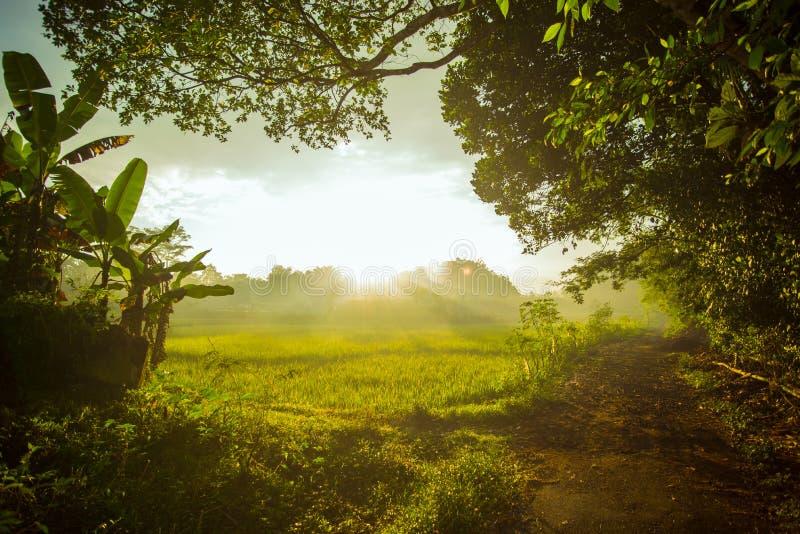 Mening van dorp met padiegebied in Indonesië stock afbeelding