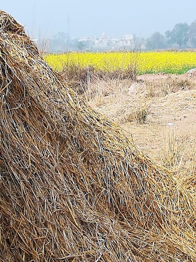 Mening van dorpsgroen in Punjab stock afbeelding