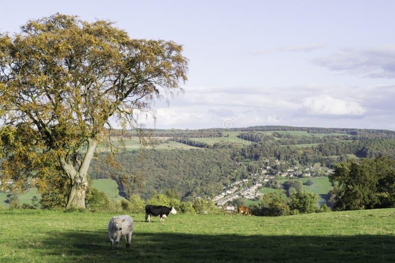 Mening van Dovedale van Stanton Moor royalty-vrije stock foto's