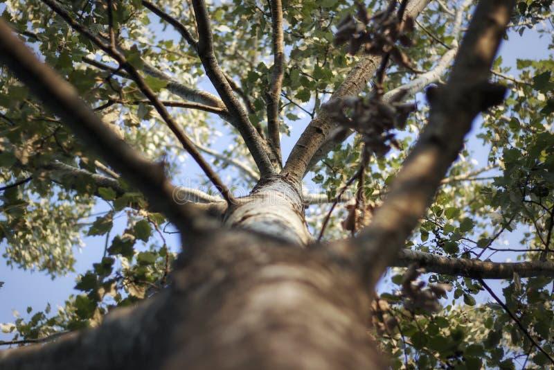 Mening van een boom bij zonsonderganglicht royalty-vrije stock foto