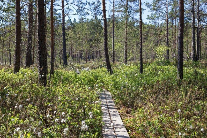 Mening van een bos in Finland royalty-vrije stock fotografie