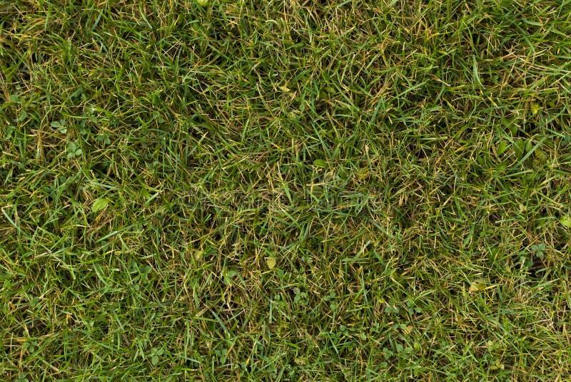 Mening van een groene grasgrond stock afbeelding