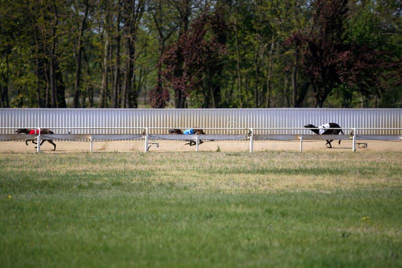 Mening van een spoor van het windhondras met het runnen van honden royalty-vrije stock foto's