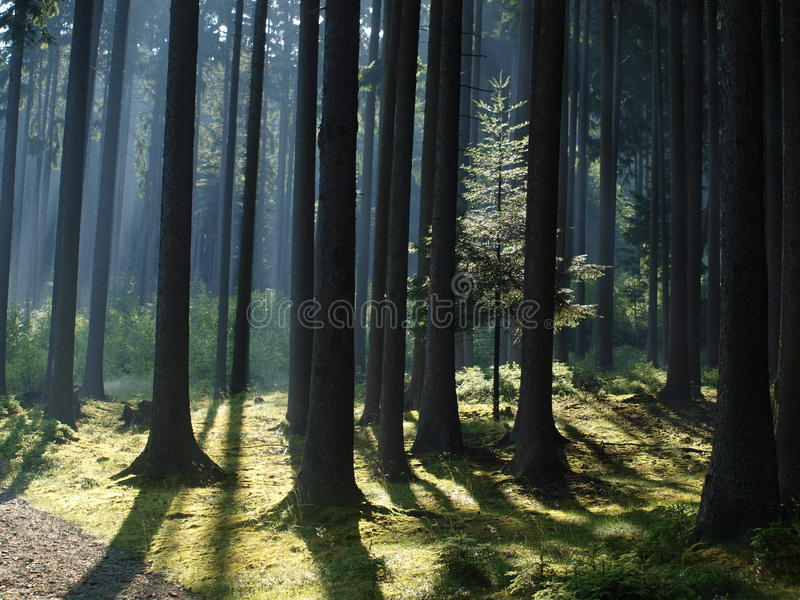 Mening van het boslandschap stock afbeeldingen