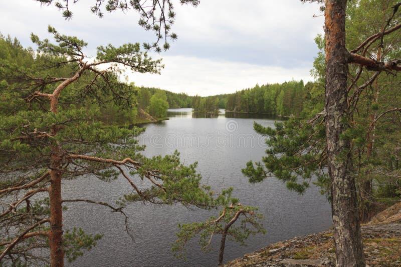 Mening van het bosmeer stock afbeeldingen