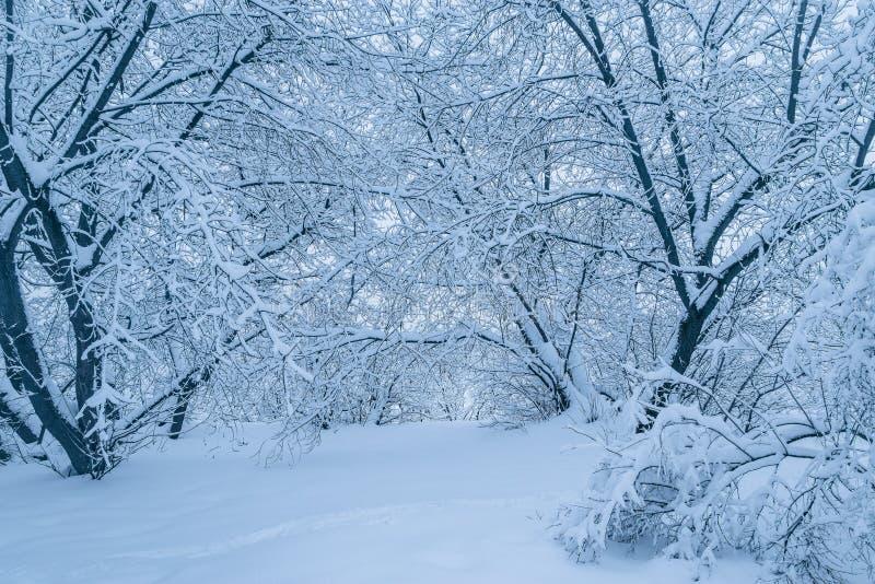 Mening van het de winterbos stock foto