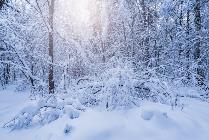 Mening van het de winterbos royalty-vrije stock foto