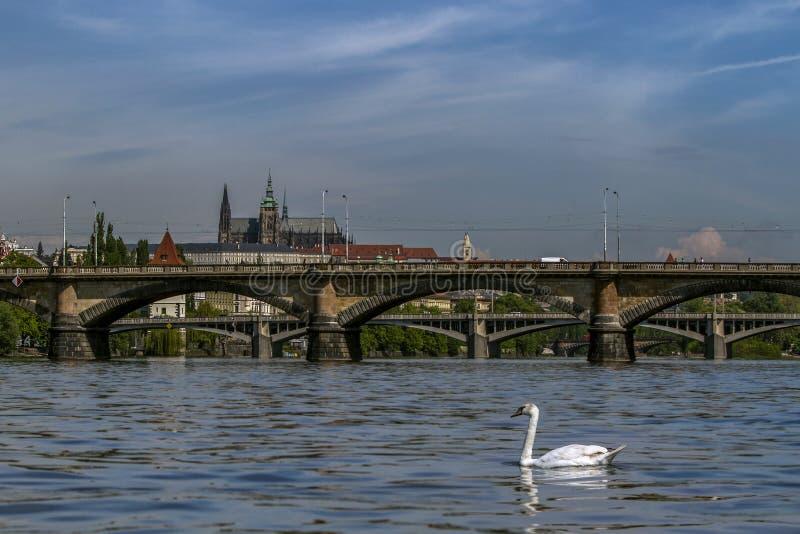 Mening van het Kasteel van Praag en de bruggen op de Vltava-Rivier in een zonnige ochtend Praag, Tsjechische Republiek royalty-vrije stock foto
