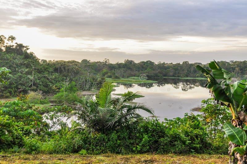 Mening van het meer in het Regenwoud van Amazonië, Manaos, Brazilië stock afbeeldingen