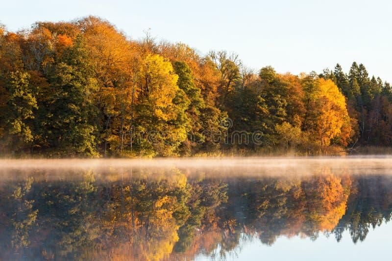 Mening van het meer met vergankelijk bos in daling stock afbeeldingen