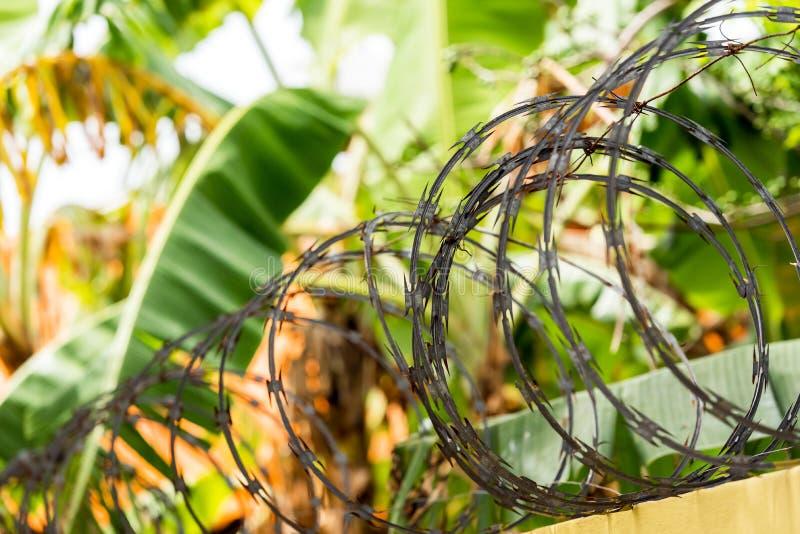 Mening van het prikkeldraad in Punta Cana, La Altagracia, Dominicaanse Republiek Close-up stock foto