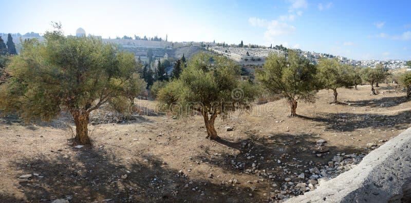 Mening van Jeruzalem van Onderstel van Olijven royalty-vrije stock foto