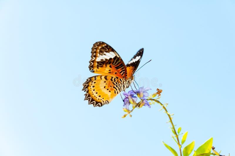Mening van Kleurrijke Oranje vlinder in de zomertijd stock foto's