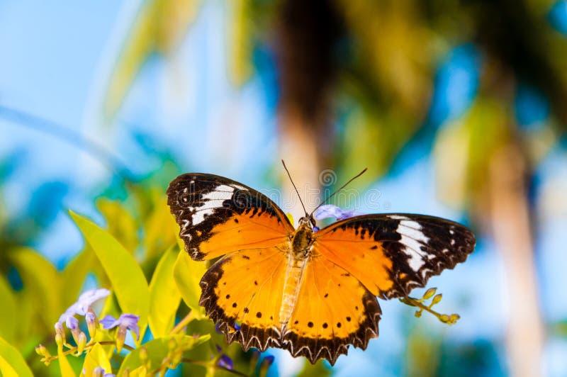 Mening van Kleurrijke Oranje vlinder in de zomertijd stock afbeeldingen
