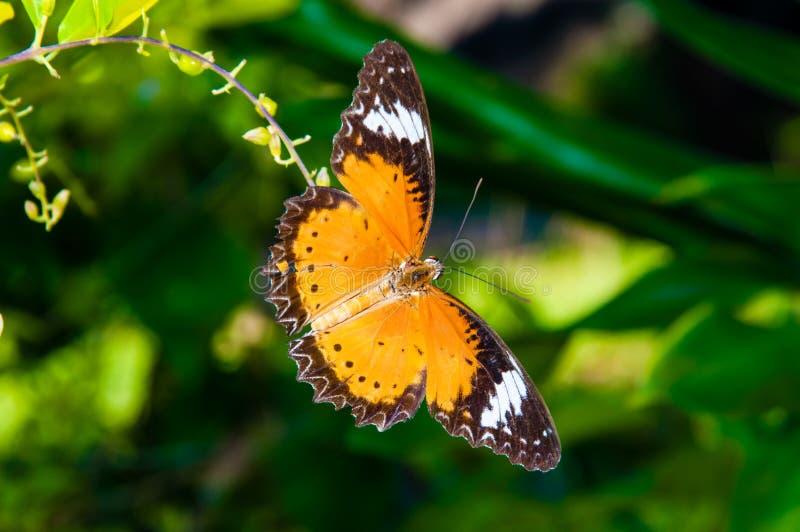 Mening van Kleurrijke Oranje vlinder in de zomertijd royalty-vrije stock foto's