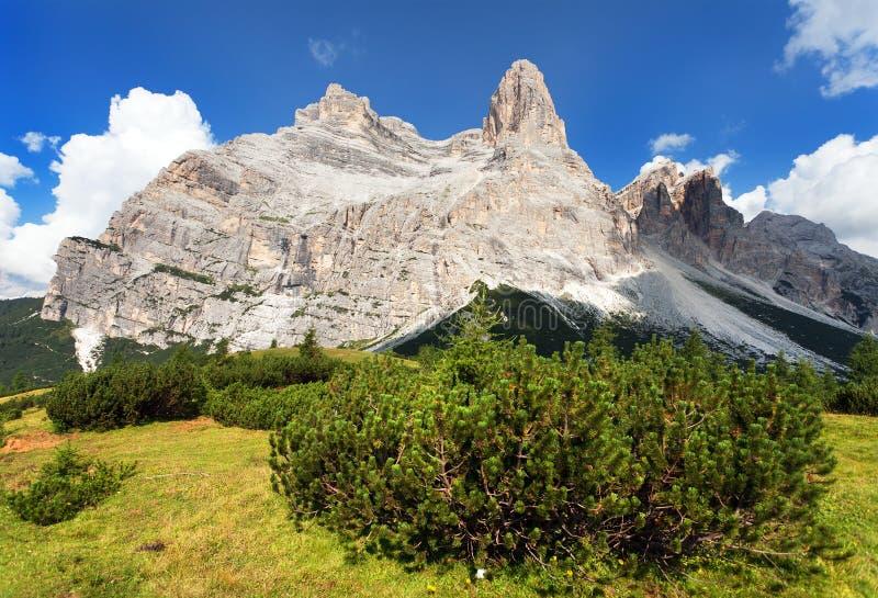 Mening van Monte Pelmo met bergpijnboom, Zuid-Tirol royalty-vrije stock fotografie