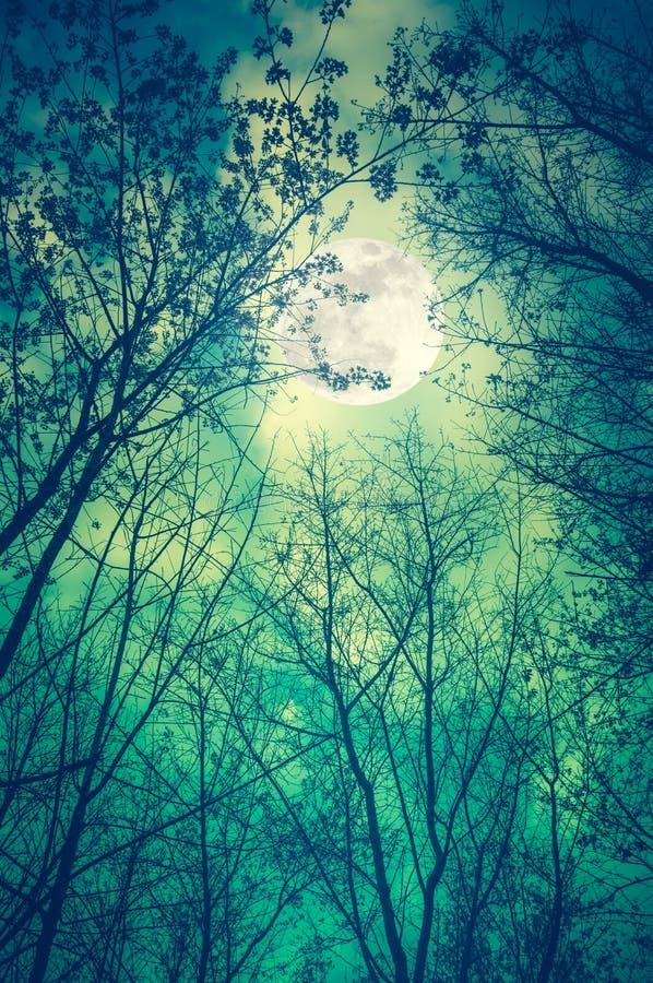 Mening van onderaan Silhouet van droge bomen tegen nachthemel en F stock foto's