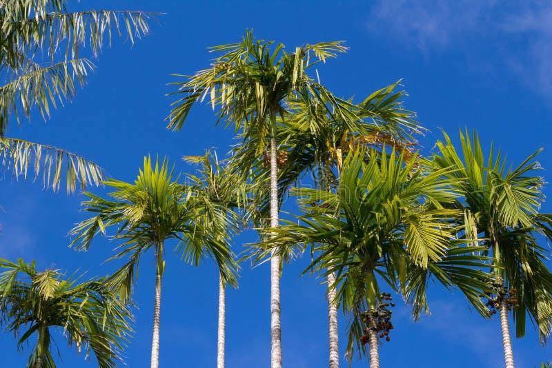 Mening van palmen, het eiland van Martinique stock afbeeldingen