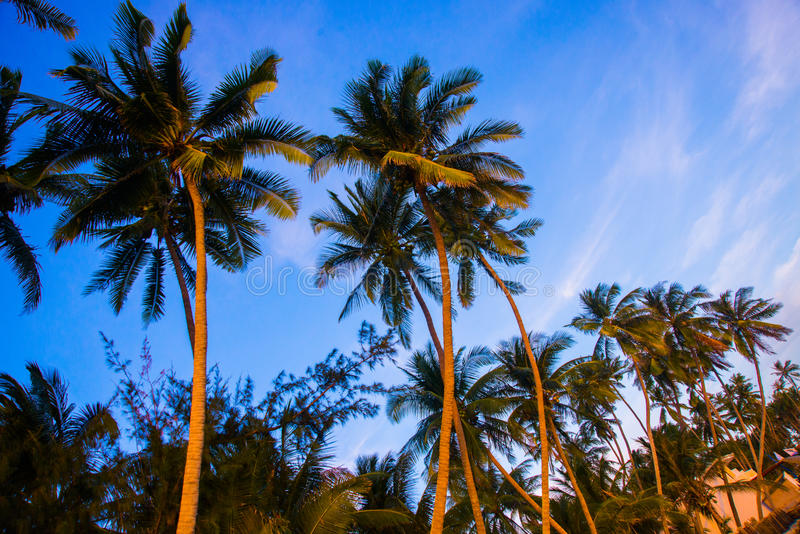 Mening van palmen tegen hemel Vietnam, Mui Ne, Azië royalty-vrije stock fotografie