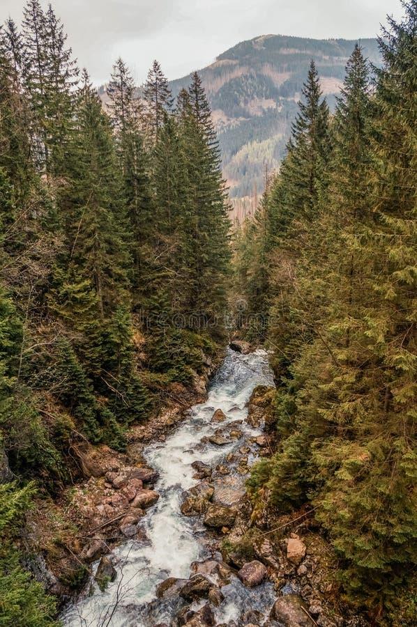 mening van rivierstroom door bomen en stenen op kusten, heuvels op achtergrond, Morskie Oko, Overzees Oog, Nationale die Tatra wo stock foto