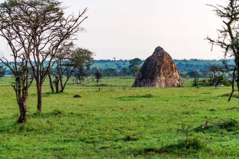 Mening van savanneaard en rots in Tanzania royalty-vrije stock afbeelding
