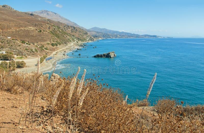 Mening van strand vanaf bergbovenkant met bloemen bij voorgrond stock fotografie