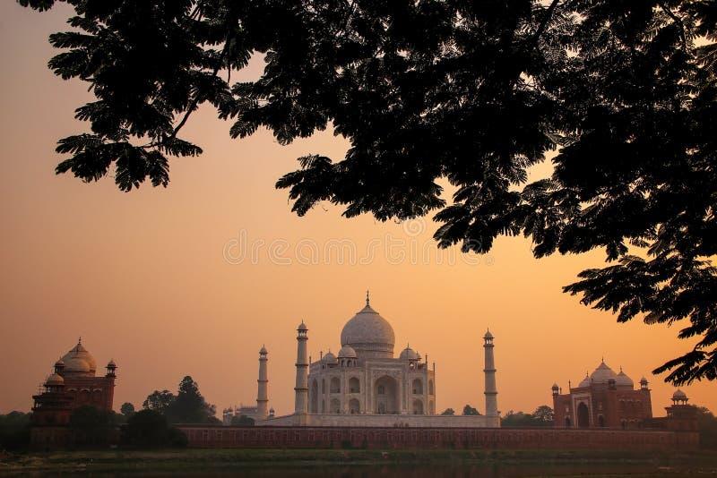 Mening van Taj Mahal door een boomkroon bij zonsondergang, Agra, Uttar wordt ontworpen die royalty-vrije stock foto