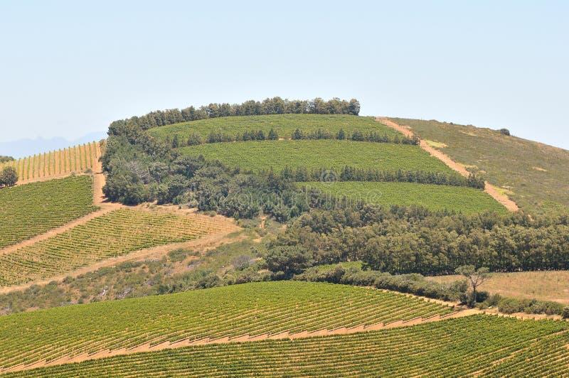 Mening van wijngaarden dichtbij Sir Lowreys Pass royalty-vrije stock afbeelding