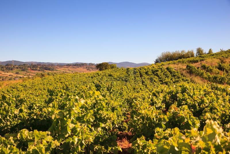 Mening van wijngaarden in het Spaanse platteland royalty-vrije stock foto