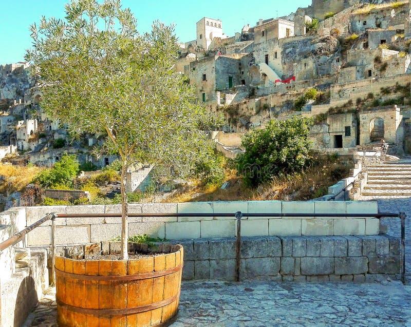 Mening van witte huizen van Matera met olijfboom in een houten kruik royalty-vrije stock afbeelding