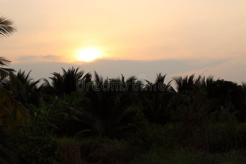 Mening van zonsondergang met sihouettegroep kokospalmachtergrond royalty-vrije stock afbeelding