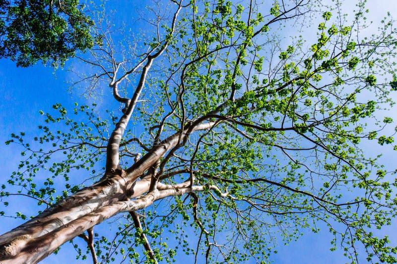 Meningen grote boom met zon lichte schaduw stock fotografie